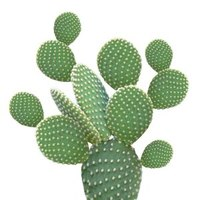 Artikelbild: Cocktail-Servietten GREEN CACTUS
