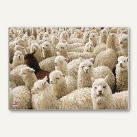 Artikelbild: Schreibunterlage Poster - Alpakas